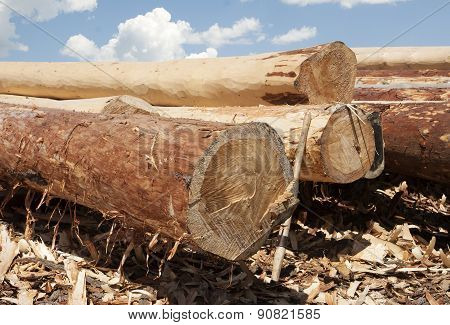 Shaved Pine logs for building Log Homes