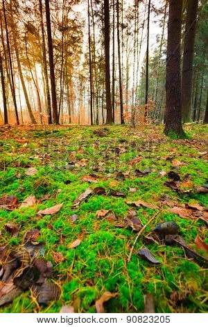 Leaves In Autumn On Forest Ground