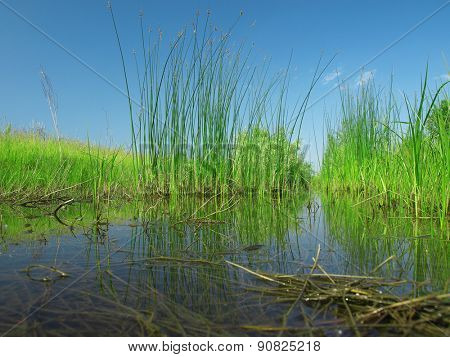 peat bog - the national park