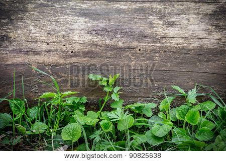 wooden background with green leaves
