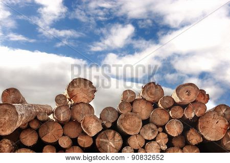 Woodpile Of Pine Logs With Blue Sky On Background