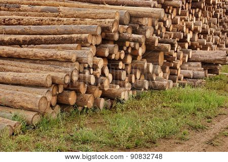 Large Wood Pile Of Logs