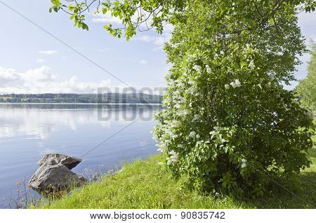 Lakeside with sunshine and white Alba, lilac flowers.