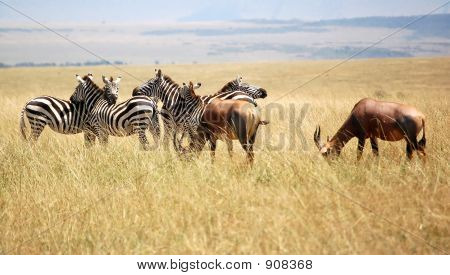 Topi And Zebra
