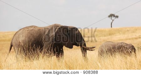 Elephant And Young