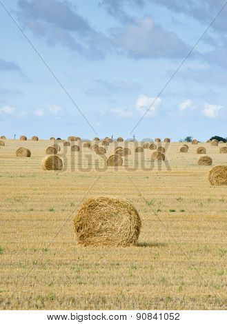 Big Field With Round Sheaves Of Yellow Straw After A Crop Harvest