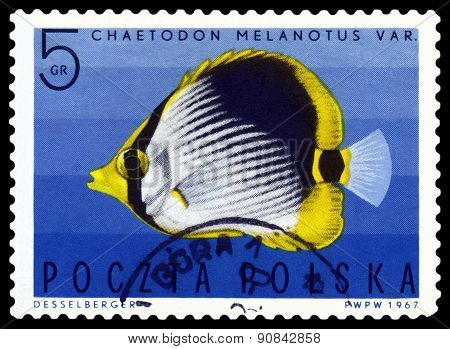Vintage  Postage Stamp. Striped Butterflyfish .