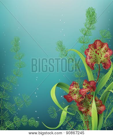 Underwater Background With Sea Plants.
