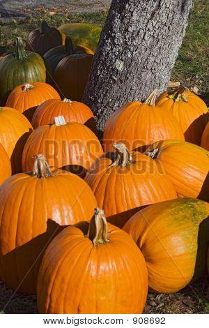 Pumpkins_2219