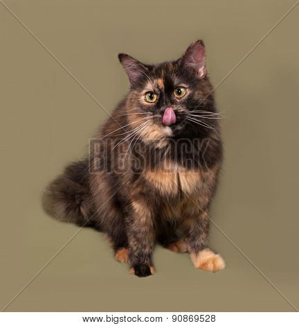 Tortoiseshell Cat Sitting On Green