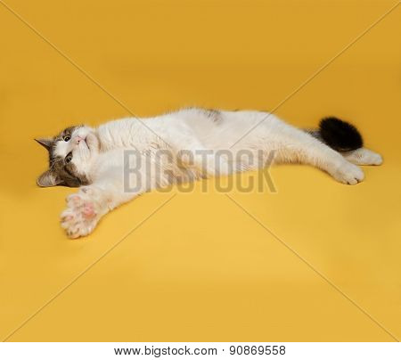 White And Striped Fluffy Cat Lies On Yellow