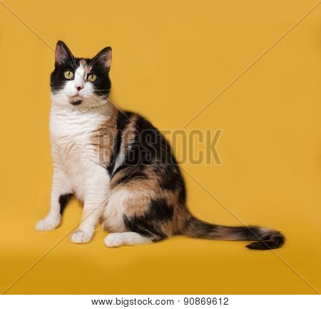 Tricolor Cat Sits On Yellow