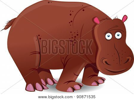Hippopotamus - Illustration
