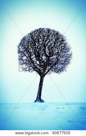 Tree On The Snow