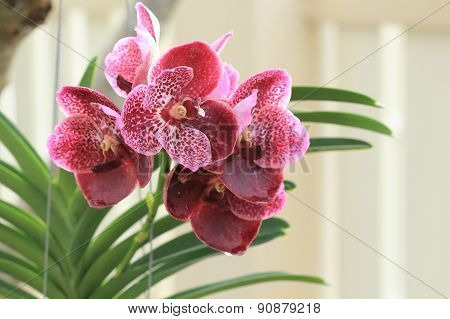 Orchid Tropical Flowers In Garden