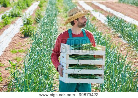 Farmer man harvesting onions in Mediterranean orchard field