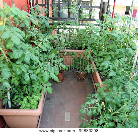 Urban Garden In The Terrace Of The Home