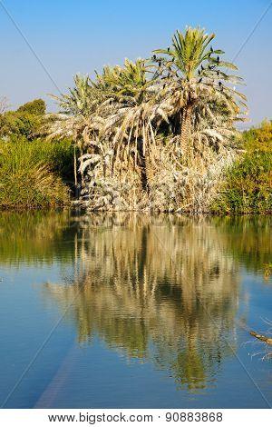 Palm Tree, En Afek