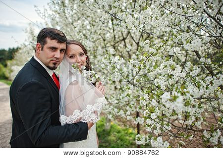 Wedding Couple At Spring Flowering And Blossom Cherries Tree