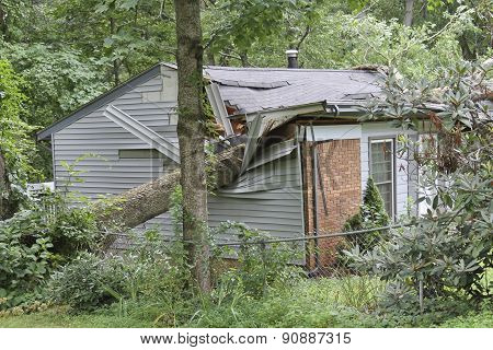Large Tree Totals A Small House