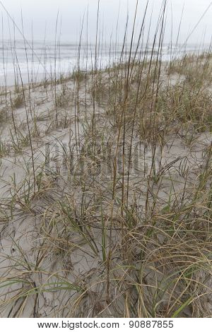 Native Grass On Sand Dunes Fights Beach Erosion