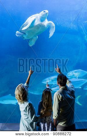 Rear view of family pointing at turtle in a tank at the aquarium