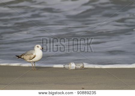 Seagull And Plastic Bottle Beach Trash