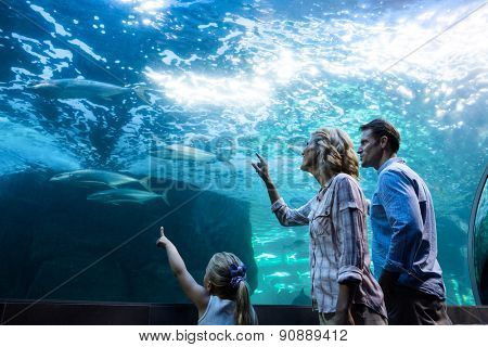 Family pointing a fish in a tank at the aquarium