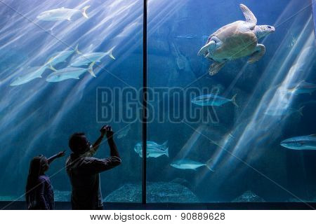 Man and his daughter taking pictures of sea turtles at the aquarium