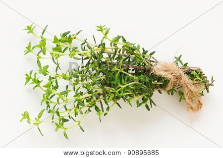 Fresh green thyme branch isolated