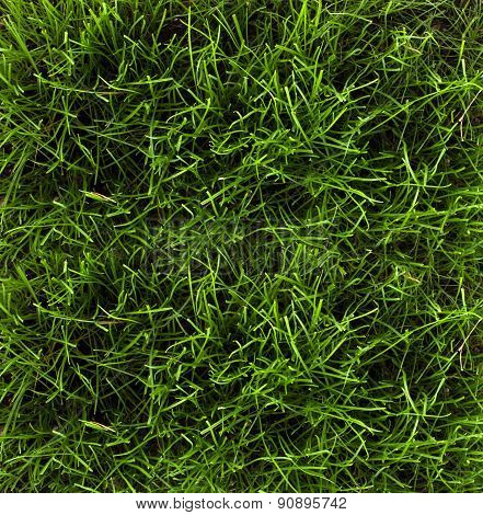 Grass Background Texture - Stock Image