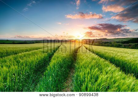 Cornish Sunset Over Farmland