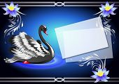 picture of black swan  - Elegant black swan on blue background with lilies and a place for your text - JPG