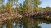 stock photo of siberia  - Spring - JPG