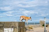 picture of staffordshire-terrier  - Adorable old Staffordshire Bull Terrier having fun at the beach - JPG