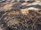 pic of gutter  - Residential house roof and gutter with flammable tree debris consisting of leaves  - JPG