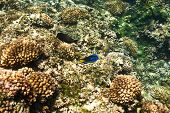 image of coral reefs  - Coral reef and fish at Seychelles - JPG