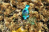picture of coral reefs  - Coral reef and fish at Seychelles - JPG
