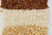 stock photo of buckwheat  - Buckwheat - JPG