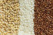 picture of buckwheat  - Buckwheat - JPG