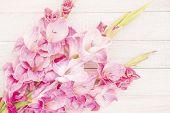 foto of gladiolus  - Pink gladiolus on a white wood background - JPG