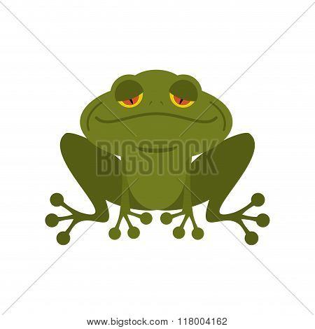 Frog. Green Melancholy Toad. Cute Freshwater With Sad Eyes. Marsh Animal.
