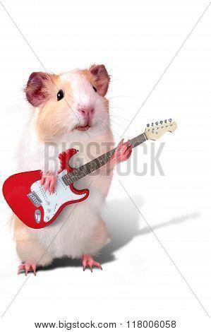Guinea pig as a musician playing guitar