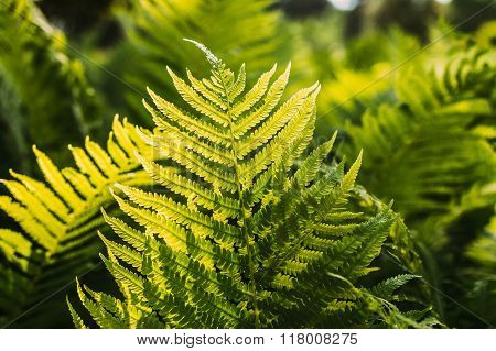 Beautyful ferns leaves green foliage natural floral fern backgro