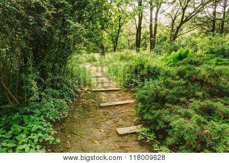 Empty Lane, Path, Way in summer forest