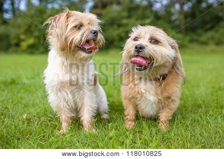 Two excited and smiling twin dogs