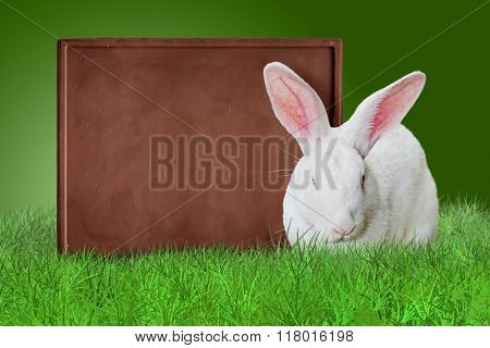 Chocolate board and white bunny on grass on green background