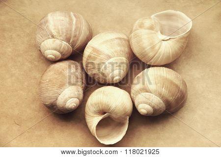 Shells Of Grape Snails