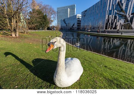 View Of Swan In Front Of The Ko - Bogen. The Ko-bogen Is A Large-scale Office And Retail Complex Des