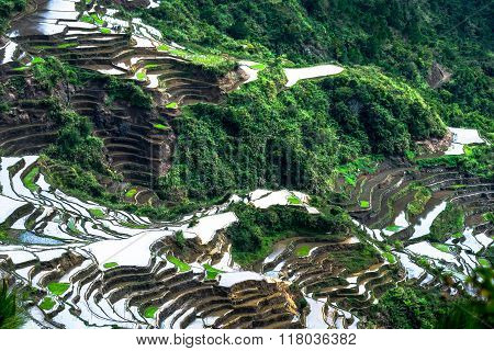 Abstract Rice Terraces Texture With Sky Reflection. Banaue, Philippines
